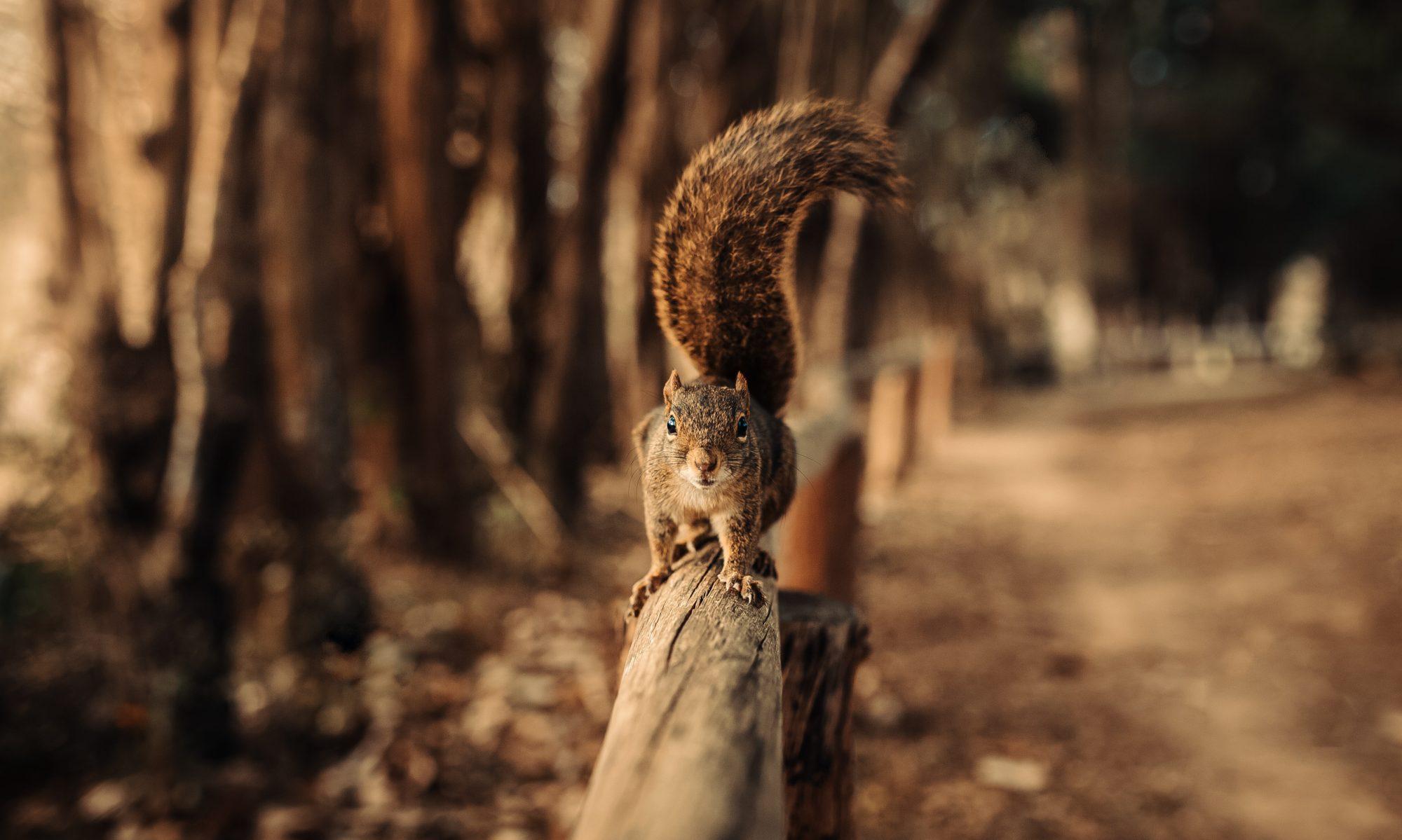 Skautský oddíl Veverky